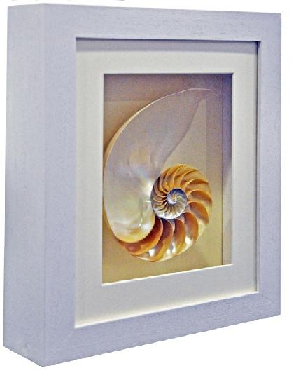Framed Sea Shell