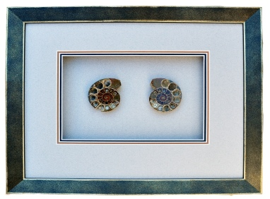 Small Dark Ammonites