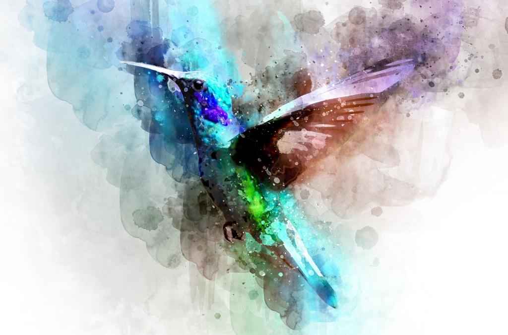 bird-3137050_1920
