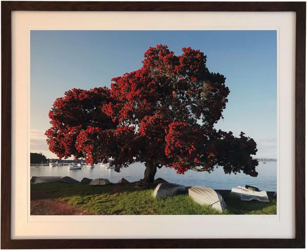 New Zealand Christmas Tree Inspirationsframing Co Uk
