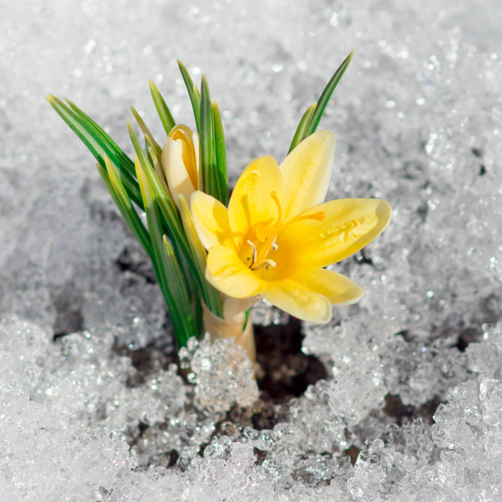Spring sq tiny